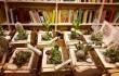"""""""Il giardino nei libri"""", a volte ritornano"""
