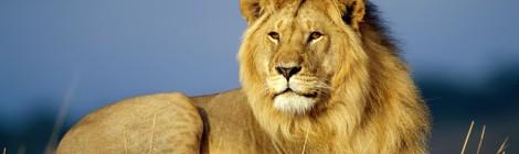 E che sia un anno da leoni!